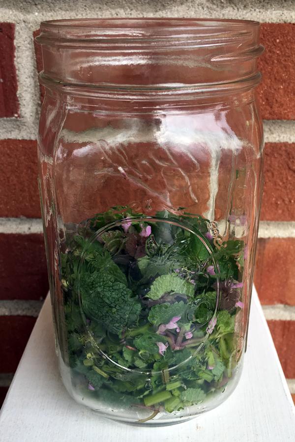 dead nettle infusion_1525
