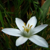 star_of_bethlehem_633